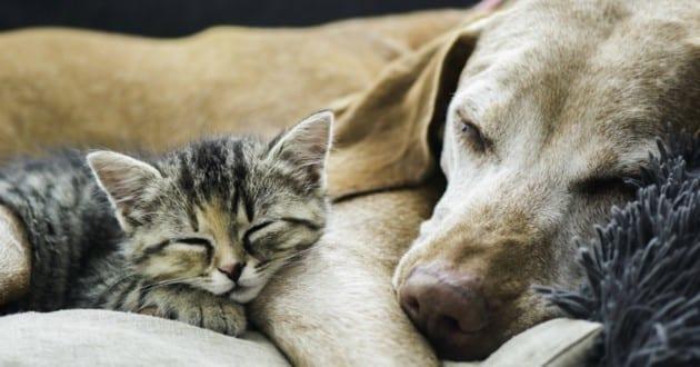 Et si on remboursait vos frais vétérinaires ?