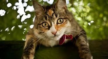 Ensemble, prenons soin de votre chat
